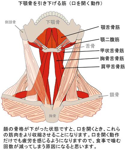 下顎を引き下げる筋